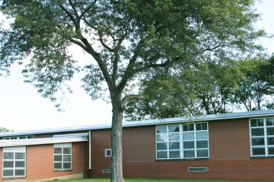 This is the larger of the two remaining trees on the playground by the seventh/eighth grade hall.