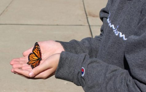 Cooper Adams, sixth grader, holds a newly tagged butterfly just before it is released on Oct. 11 outside the middle school.