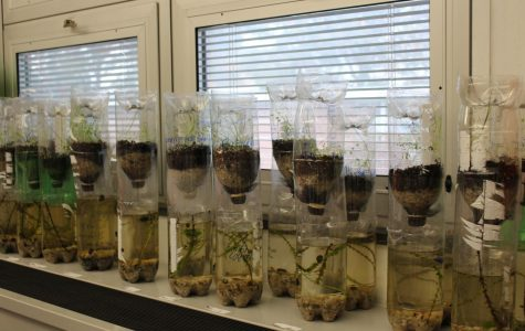 The fifth grade students created terrariums and aquariums in Mrs. Perry's science class for the ecosystem unit.