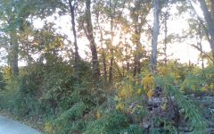Picture of the woods in autumn