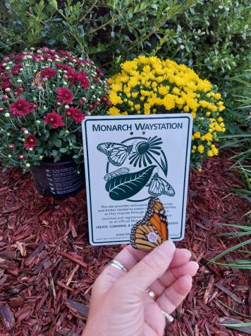 The courtyard classroom was named an official monarch waystation. A tagged monarch is released by Ms. Ging on Sept. 30.