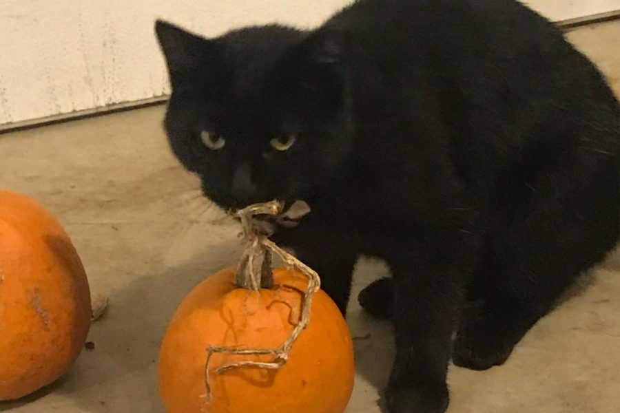 Some of the symbols for Halloween are the black cat and the pumpkin