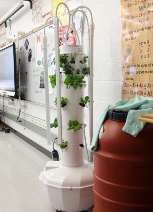 This is the new Tower Garden in Ms. Ging's room E110.